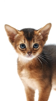 Portret van een beetje grappig bruin kitten