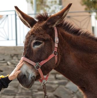 Portret van een ezel op de boerderij.