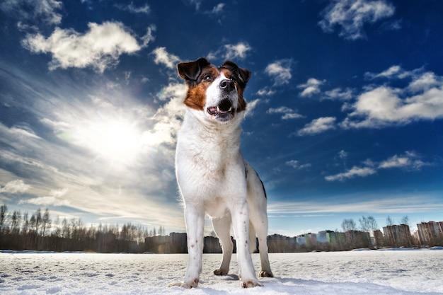 Portret van een gelukkige schattige hond die zit en kijkt naar de camera op een winterveld tegen de zon