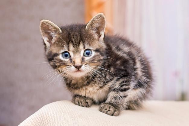 Portret van een gestreepte kitten in een kamer