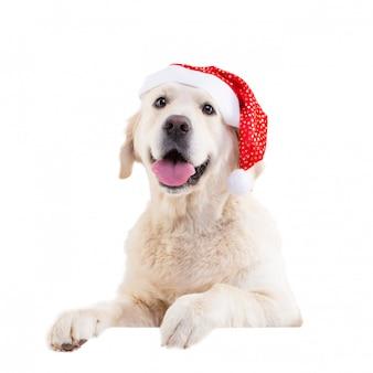 Portret van een golden retriever in een kerstmuts