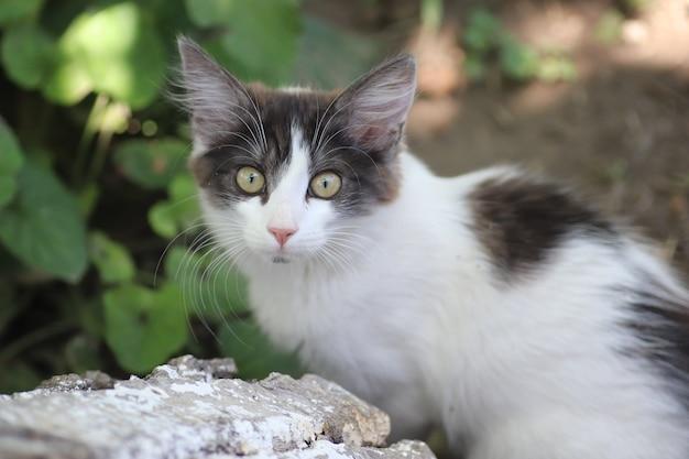 Portret van een grijswitte kleine huiskat buiten op een achtergrond van groene bladeren