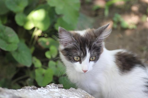 Portret van een grijswitte kleine huiskat buiten op een achtergrond van groene bladeren Premium Foto