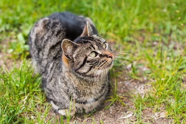 Portret van een grijze cyperse kat met lange snorharen