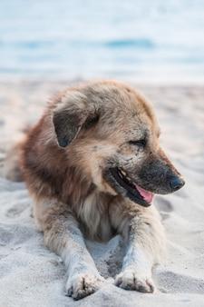 Portret van een hond aussie tegen de blauwe hemel door de zee
