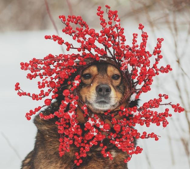 Portret van een hond buiten in de winter. de hond die de rode kroon van kerstmis draagt.
