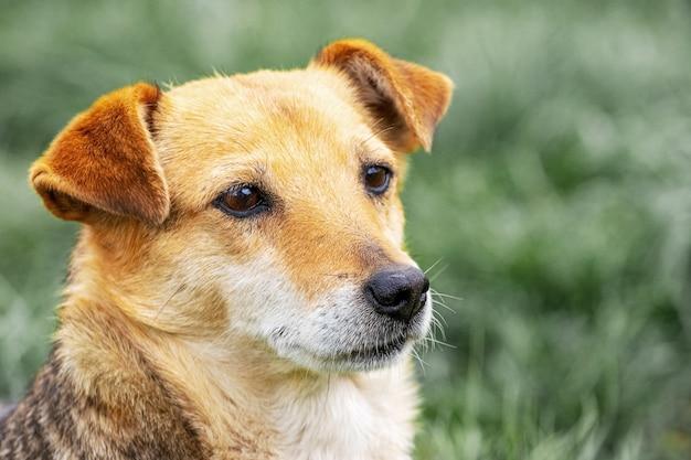 Portret van een hond die aandachtig in de verte kijkt