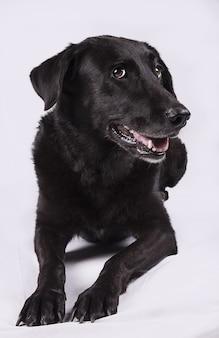 Portret van een hond die er vragend en uitdagend uitziet