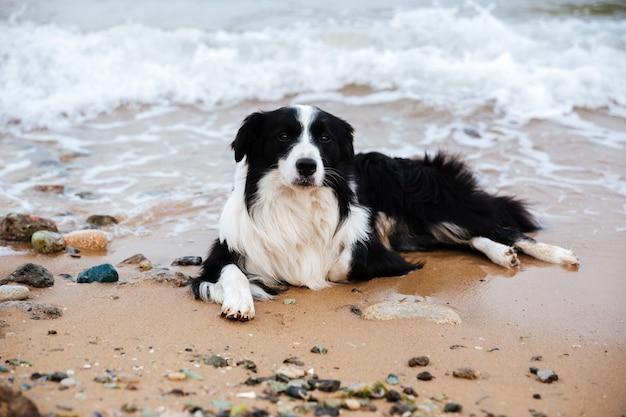 Portret van een hond die op het strand ligt