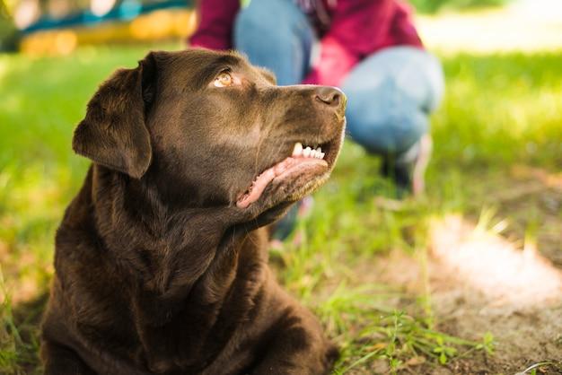 Portret van een hond die weg eruit ziet