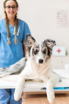 Portret van een hond met een blinddoek op tafel