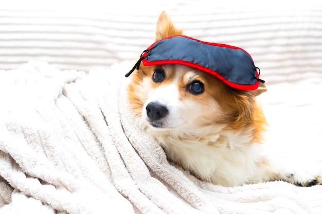 Portret van een hond met een slaapmasker op zijn hoofd