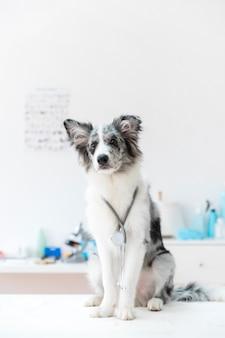 Portret van een hond met een stethoscoop rond de nek op witte tafel