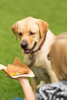 Portret van een hond met sandwichvoedsel