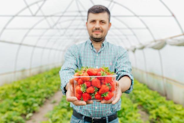 Portret van een jonge boer in een aardbeienveld die zijn oogst presenteert in doorzichtige plastic doos rode vers geplukte aardbeien rijp fruit in de kas selectieve focus
