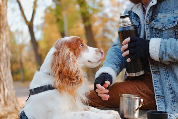 Portret van een jonge cocker-spaniël die zijn neus likt en zijn eigenaar bekijkt. een man en zijn huisdier op een herfstwandeling of picknick in het park, hond en huisdier eigenaar communicatieconcept