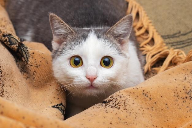 Portret van een jonge kat die in bed ligt