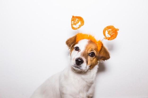 Portret van een jonge schattige hond die een grappig halloween-diadeem draagt. binnenshuis