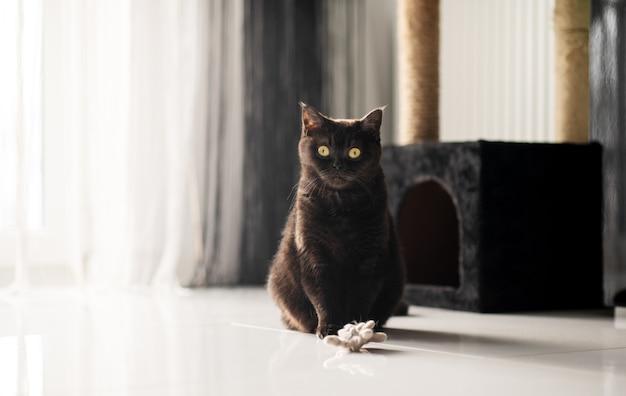 Portret van een kat die in de buurt van zijn pluche huis zit