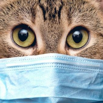 Portret van een kat in een medisch masker op quarantaine thuis.