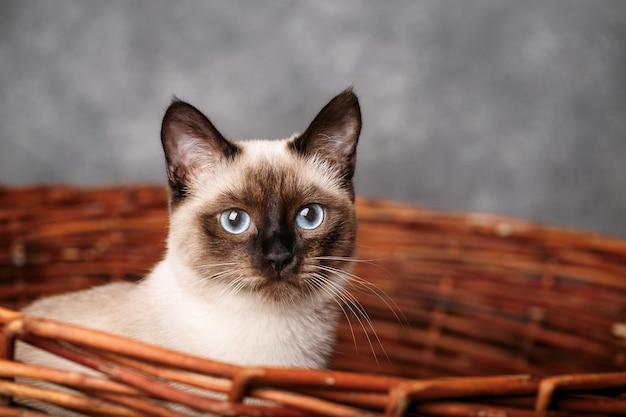 Portret van een kat met blauwe ogen in mand