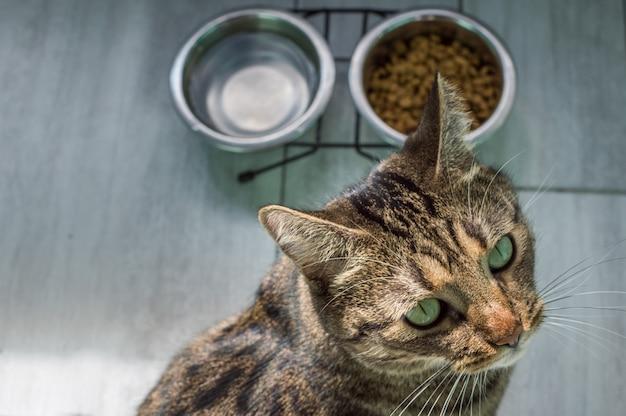 Portret van een kat op een grijze vloer met water en droogvoer close-up