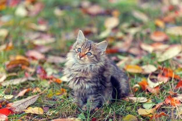 Portret van een klein katje op het gras met gevallen bladeren in de herfst