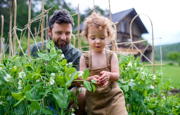 Portret van een klein meisje met vader die in de moestuin werkt, duurzame levensstijl.