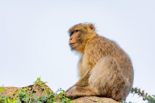 Portret van een kleine aap