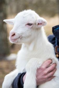 Portret van een kleine geit in de armen van een jonge vrouw
