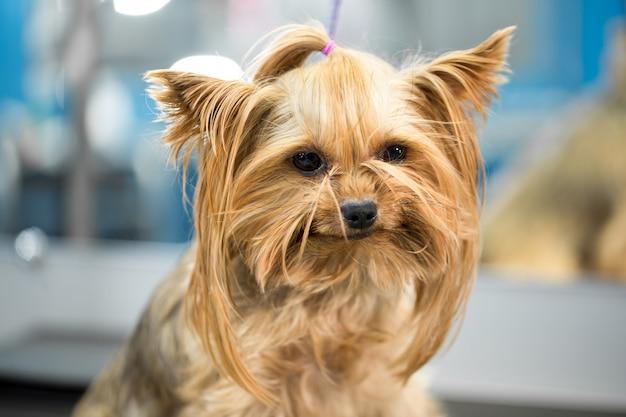 Portret van een kleine hond in het ziekenhuis op tafel voor onderzoek