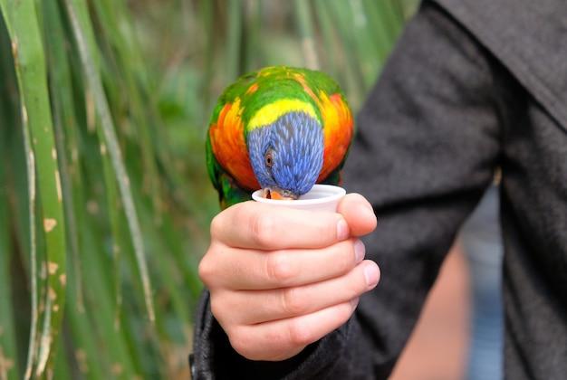 Portret van een kleine kleurrijke papegaaizitting op een tak.