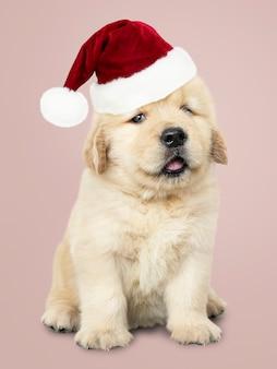 Portret van een leuk golden retrieverpuppy die een kerstmanhoed dragen