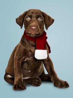 Portret van een leuke labrador die een kerstmissjaal draagt