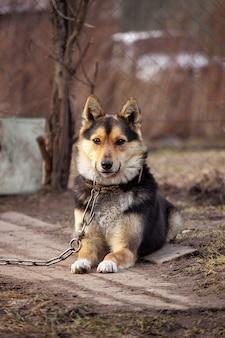 Portret van een mooie hond aan een ketting zittend