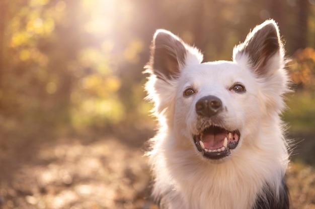 Jong meisje thuis een hond uitschelden voor wol, shows op een roller voor  het schoonmaken | Premium Foto