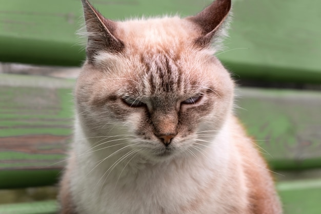 Portret van een mooie ontevreden kat close-up