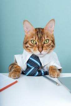 Portret van een ontevreden katachtige baas met een laptop aan de kantoortafel. de kat is de baas