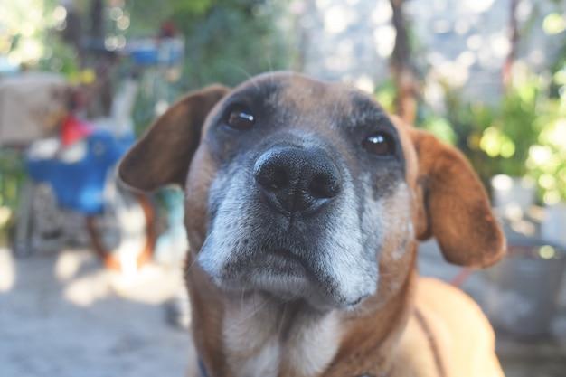 Portret van een schattig hondclose-up
