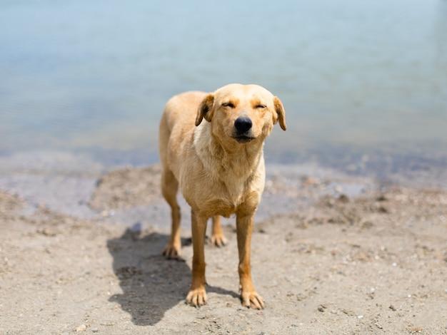 Portret van een schattige dakloze hond foto van hoge kwaliteit