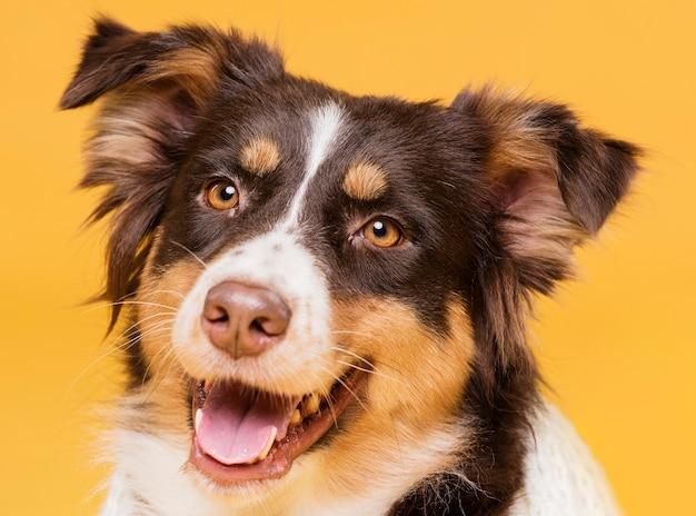 Portret van een schattige hond