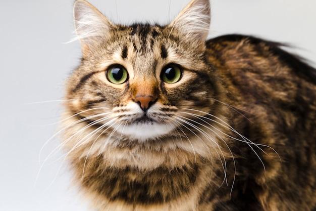 Portret van een schattige kat