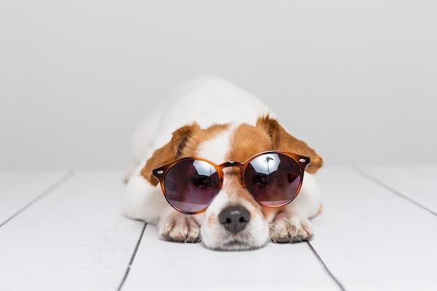 Portret van een schattige kleine hond die moderne zonnebril draagt