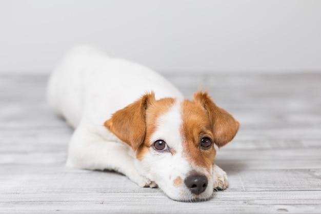 Portret van een schattige kleine hond liggend op de bank