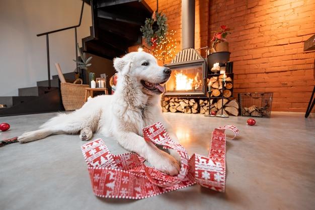 Portret van een schattige witte hond die met een feestelijk lint bij de open haard ligt tijdens een nieuwjaarsvakantie thuis