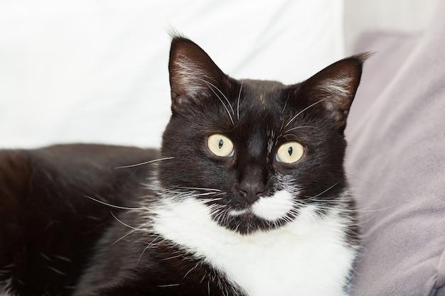Portret van een schattige zwart-witte langharige kat met gele ogen Premium Foto
