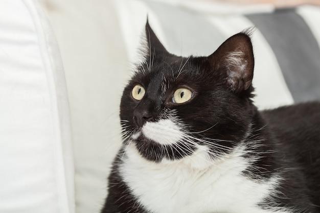 Portret van een schattige zwart-witte langharige kat met gele ogen