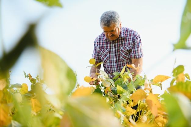 Portret van een senior hardwerkende agronoom die in het veld van sojabonen staat en gewassen controleert vóór de oogst. biologische voedselproductie en -teelt.
