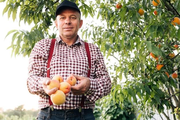 Portret van een senior man in perzikentuin die vol vertrouwen naar de camera kijkt, mannelijke handen houden perziken vast