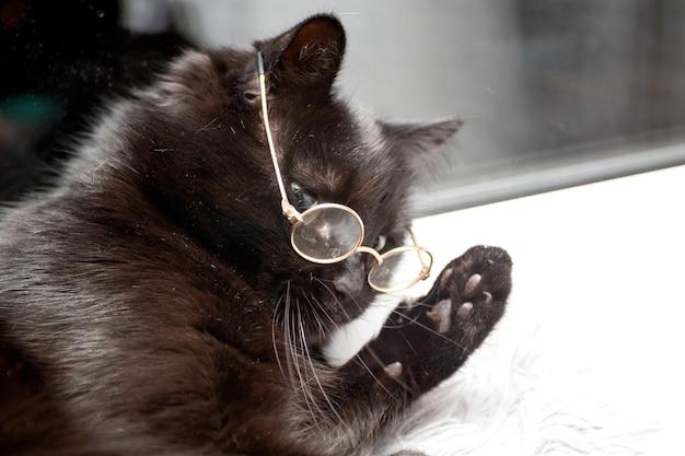 Portret van een slimme zwarte kat met bril